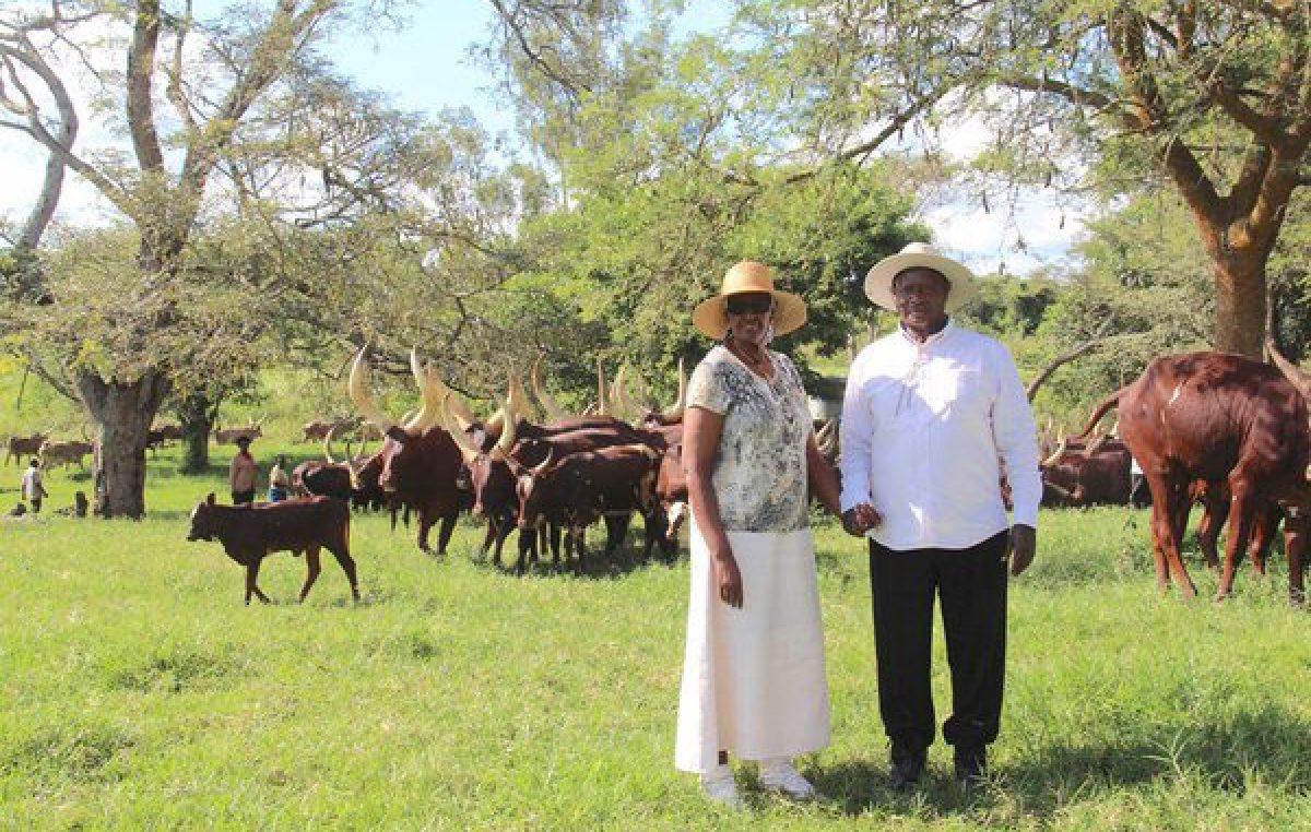 Uganda allots 27 square miles of land to UAE investor